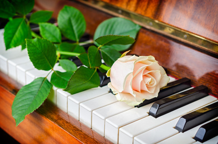 Single white rose lay on the keys of a grand piano photo