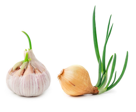 Germinating onion and garlic isolated on white background photo