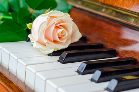 piano: Single pink rose lay on the keys of a grand piano