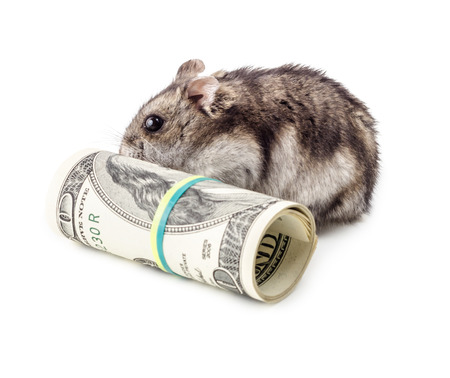 devaluation: Mouse gnaws money isolated on white background. Concept of devaluation, recession and financial collapse.