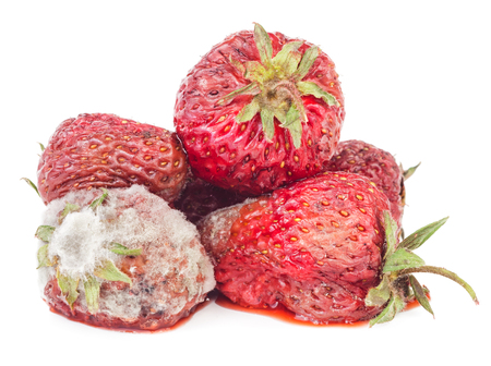 mouldy: Rotten strawberry isolated on white background. Moldy fruits Stock Photo