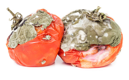 Rotten tomatoes isolated on white background. Moldy vegetable. Stock Photo