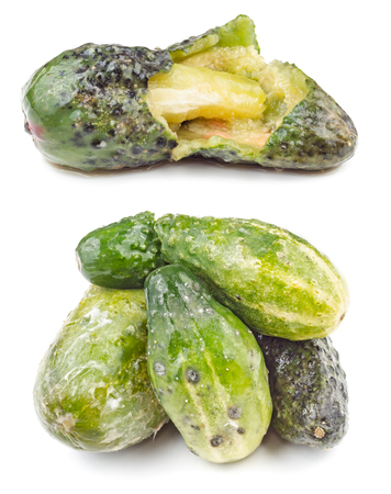 depraved: Rotten and moldy cucumbers isolated on the white background