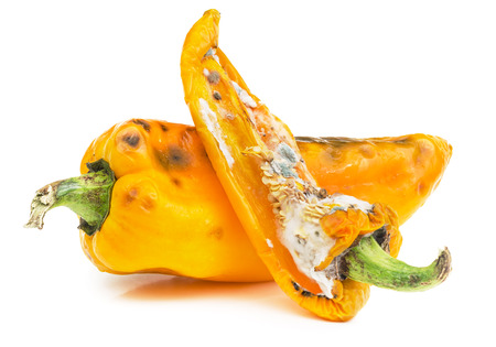 Rotten yellow bell peppers isolated on white background. Moldy vegetable.