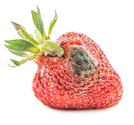 Rotten strawberry isolated on white background. Moldy fruits  Stock Photo
