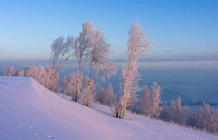 Snow and trees, lit by the rays of the rising sun photo