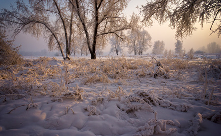 Trees covered with a thick layer of frost branches, lit by the setting sun. photo