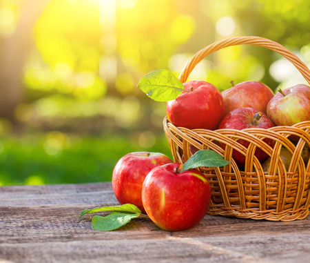 apple: Organic apples in basket in summer grass. Fresh apples in nature