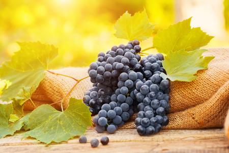 uvas: Uvas en una vieja mesa de madera en la naturaleza