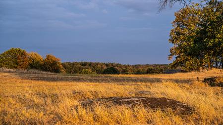Summer 2018 - meadow near village B?ez? (Kov??ov)