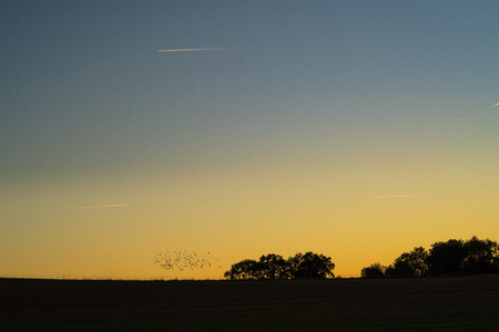 Sunset and flock of birds