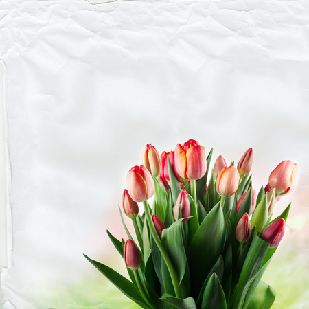 extensive: a large bouquet of red tulips on white paper texture