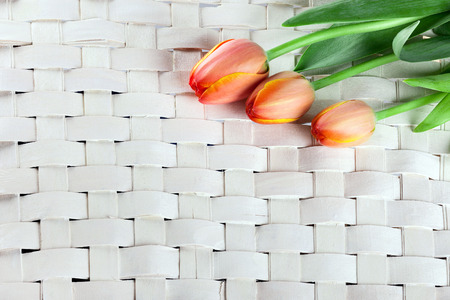 three red tulips on wooden wicker background photo
