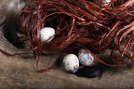 quail nest: Three quail eggs lying beside ruined nest. Close-up