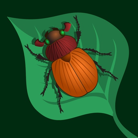 beetle: Beetle on leaf. This is an illustration of the beetle sitting on a leaf of the plant.