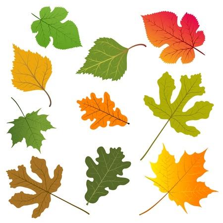 Les feuilles des arbres.