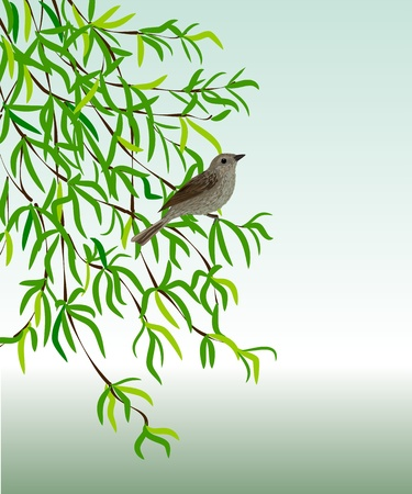 Nightingale on a branch. Vector illustration - a bird sits on a plant with green leaves.   Ilustração
