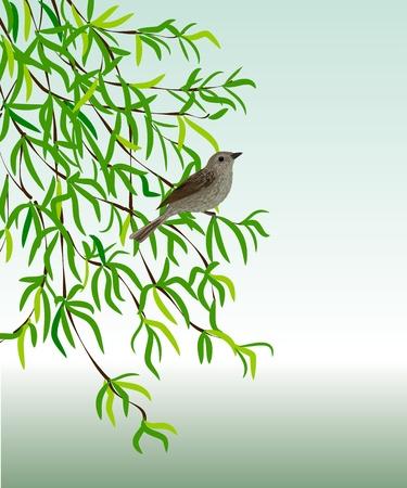 usignolo: Usignolo su un ramo. Illustrazione vettoriale - un uccello si siede su una pianta con foglie verdi.