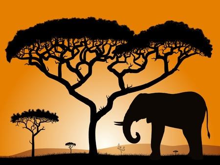 Savannah - elephant. Dawn in the African savanna. Silhouettes of trees and elephant against the backdrop of an orange sky.   Ilustração