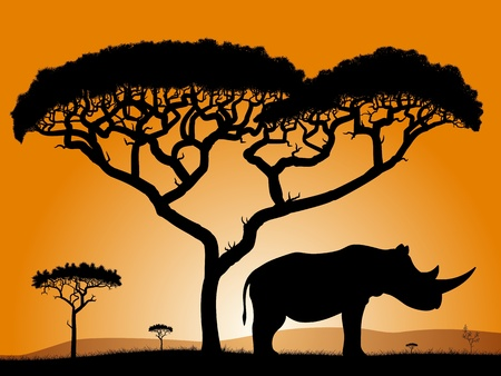 Savannah - rhino. Dawn in the African savanna. Silhouettes of trees and a rhino on the background of the sky orange.