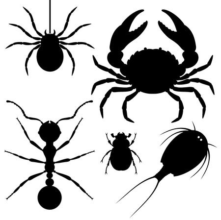 arachnids: Silhouettes of animals  Arthropods  spider, crab, beetle, triops, ant    Illustration