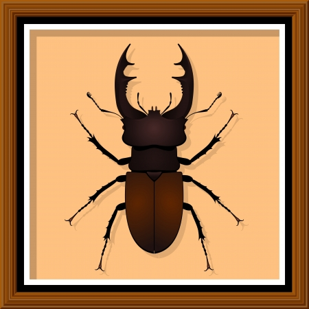 Stag Beetle  Entomological exhibit - Stag Beetle in the frame Stock Vector - 16269770