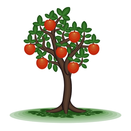 APPLE trees: Persimmon   Decorative tree with orange fruit  Vector illustration  Illustration