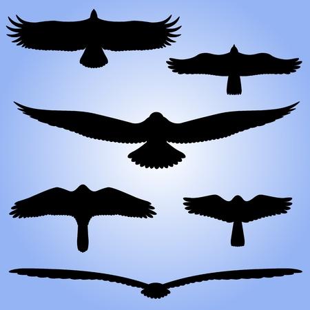 Silhouettes of birds  Black silhouettes of birds in flight  Vector illustration  Illustration