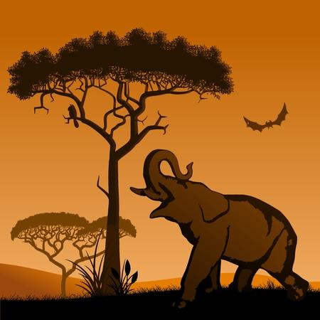 Savannah - elephant. Savannah, the silhouette of the trees and the elephant.