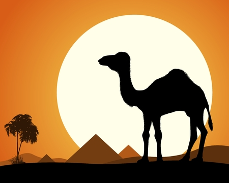 egyptian pyramids: Camel in Desert. Silhouette of a camel on a background of the desert. Camel on the background of the Egyptian pyramids. Illustration