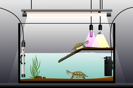 terrarium: Aquaterrarium. Schematic representation of the terrarium. Terrarium equipment. Vector illustration. Illustration