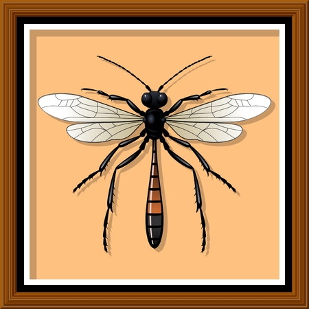 insecta: Sand wasp. Entomological exhibit - Wasp in the frame. Vector illustration.
