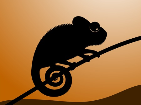 backlit: Vector illustration of chameleon. Black contour of a chameleon on a sunset background.