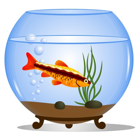 aquarist: Vector illustration of a fishbowl. Fish in a round aquarium with water plants.