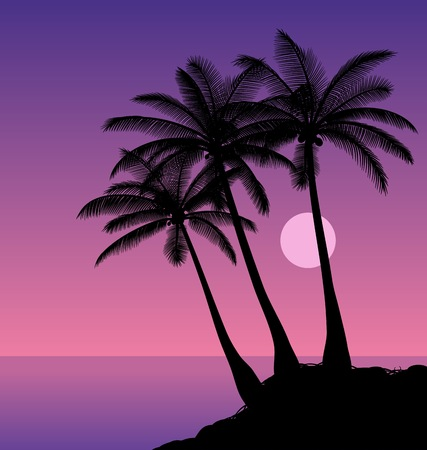 ocean plants: Coconut palms. Silhouettes of palm trees against the night sky. Vector illustration.