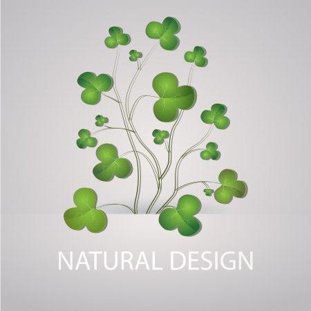 Vector background with clovers. Vector