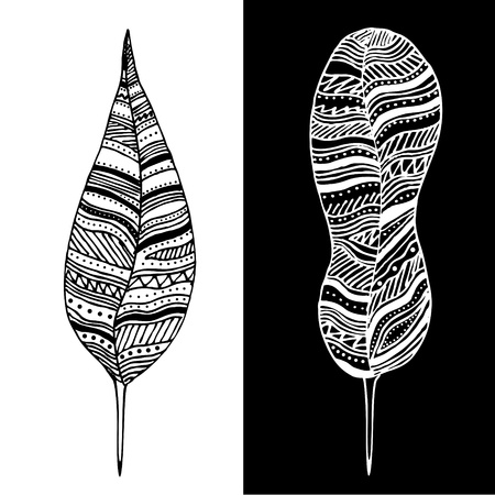 Abstract black and white feathers Vector