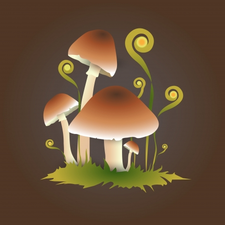 Vector illustration of mushrooms Vector