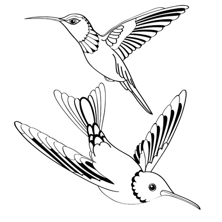 birds in black and white Vector