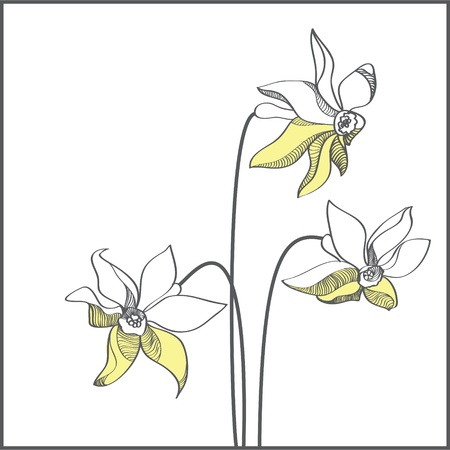 Stylized yellow narcissus flowers illustration Stock Vector - 19228683