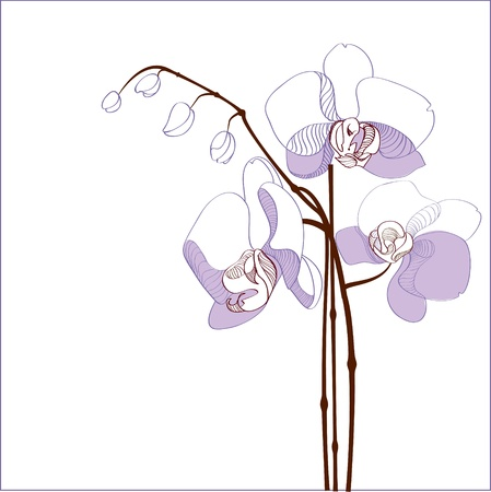 Elegance branch of purple orchids illustration Stock Vector - 19228684