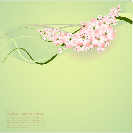 Spring background with spring flowers - vector illustration Stock Vector - 19347319