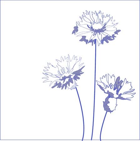 Blue cornflower (Centaurea cyanus) - vector illustration Vector