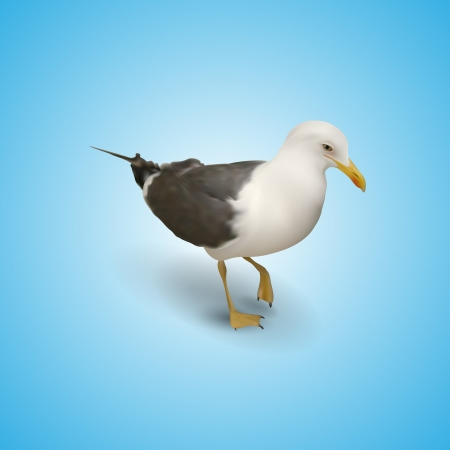 Illustration of seagull Vector