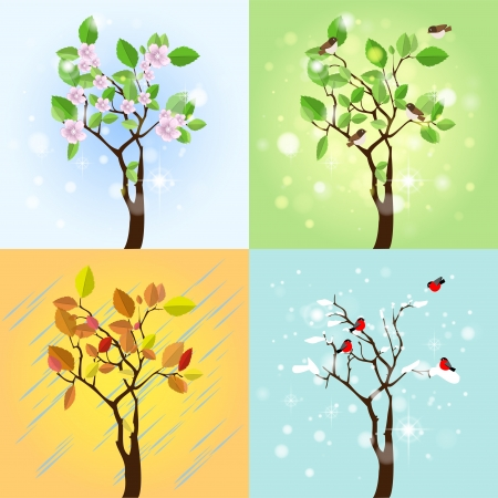 Four Seasons Tree. Vector