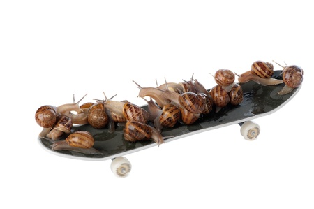 Snails are moving much faster with the aid of roller skates. Stock Photo