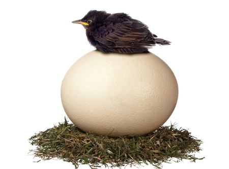 A little bird sits in vain on a large egg waiting for it to hatch  It is a futile exercise