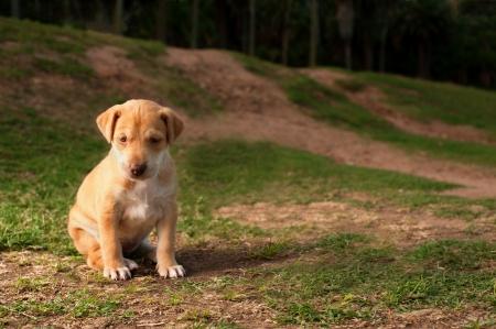 fend: Un solitario giovane cucciolo di cane � lasciato solo a se stesso Archivio Fotografico