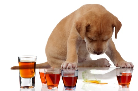 A fatigued puppy sits with its head down over some tots of alcohol.