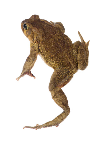 A birds eye view of a toad is shown.
